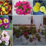WINTER GLORY – ABUNDANCE OF ANNUAL FLOWERS 2010-'11