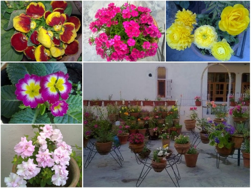 annual-flowers-on-terrace