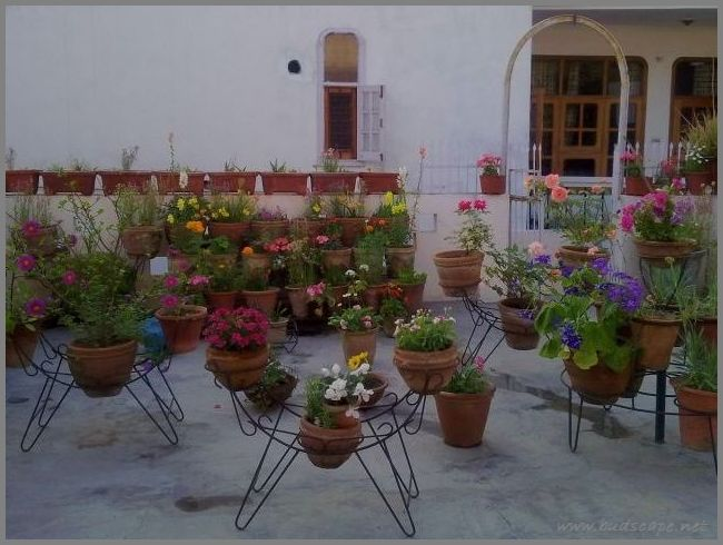 flower-garden-on-terrace