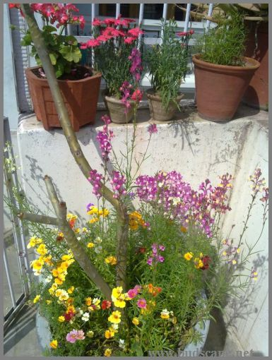 mixed-flowers-container