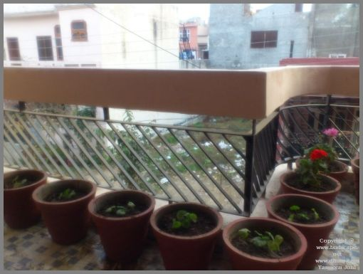 rooting-geraniums-in-water-from-leaf-cuttings-2