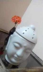 geranium indoors