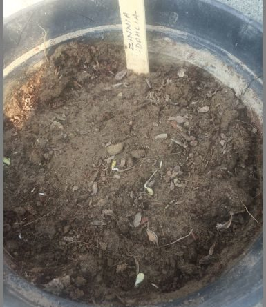 SEEDS GERMINATION