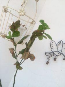 GROWING LEMON PLANT IN POT TERRACE GARDEN