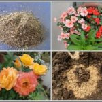 PROMOTE FLOWERING WITH BONEMEAL – NATURAL WAYS TO FERTILIZE #3
