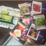 BUYING SEEDS ONLINE IN INDIA – JUST IN