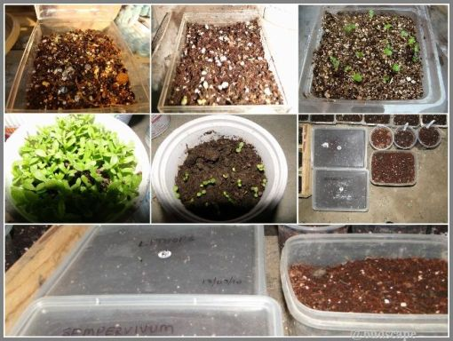 SEED SOWING METHODS