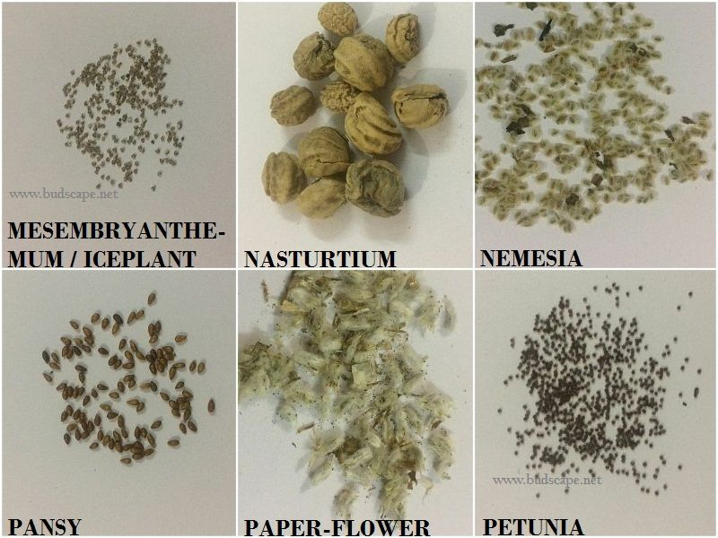 flower-seed-identification-chart