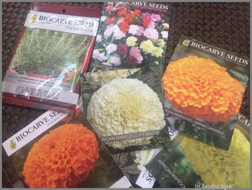 how-to-sow-seeds-marigold-carnation-rosemary