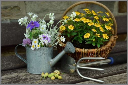 NEWBIE's GUIDE TO CORRECTLY WATERING PLANTS