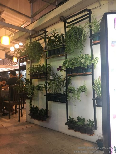 VERTICAL POTS DISPLAY ON WALL