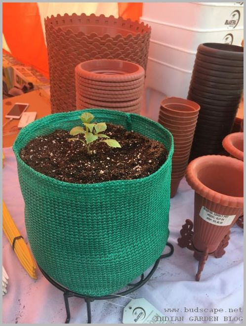 plant in grow bag